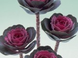 Brassica Oleracea Crane - Rose