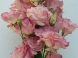 Lisianthus Wave - Misty Pink