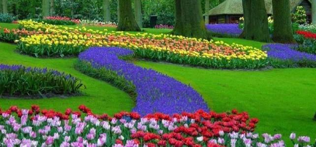 Tulipanes Normales