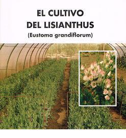 El cultivo de Lisianthus (Eustoma grandiflorum)
