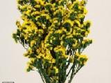 Statice Sinuata Yellow